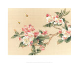 Apple Blossoms Posters