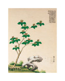Flowering Chinese Tree IV Posters