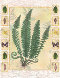 Forest Sword Fern Print by Walter Robertson