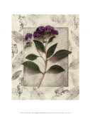 Heliotrope Prints by Julie Nightingale