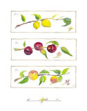 Summer Branches Prints by Robbin Gourley
