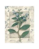 Borage Prints by Julie Nightingale