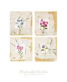 Nature's Gift II Print by Antonietta Vernice
