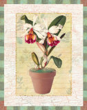 Potted Cattleya Print by Walter Robertson