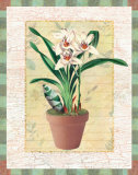 Potted Cymbidium Art by Walter Robertson