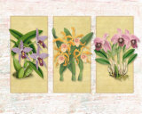 Tropical Orchid II Prints by Walter Robertson