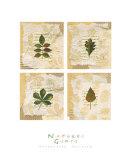 Nature's Gift I Posters by Antonietta Vernice
