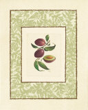 Plums Prints by Linda Casey