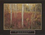 Discovery: Aspen Trees Reprodukcje