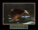 Leaders - Aigle à tête blanche Affiches
