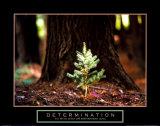 Beslutsomhed: Lille grantræ, på engelsk Plakater