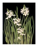 Spray of Narcissus Prints by Tan Chun