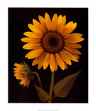 Sunflower II Prints by Tan Chun