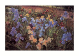 The Iris Bed Prints by Timothy Easton