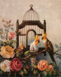 Cockatiel and Roses Affiche par Maxine Johnston