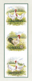 Rooster and Four Chickens Posters by Peggy Thatch Sibley