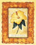 Hibiscus Prints by Richard Henson