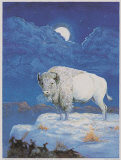 Wei&#223;er Bison Poster von M. Caroselli