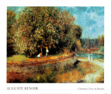 Chestnut Tree in Bloom Posters by Pierre-Auguste Renoir