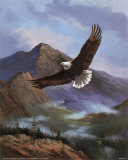 Eagle Gliding Prints by M. Caroselli