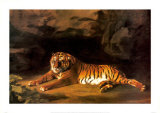 Portrait of the Royal Tiger Posters by George Stubbs