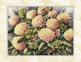 Pink Hydrangea Prints by Peggy Thatch Sibley