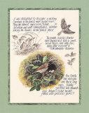 Bird Study Prints by Michelle Mara