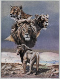Lion Montage Print by Gary Ampel