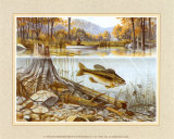 Trout Under Water Prints