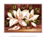 Magnolias en flor Lminas por Peggy Thatch Sibley