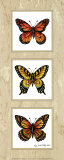 Monarch Butterflies Prints by Peggy Thatch Sibley