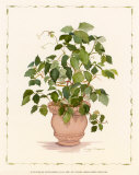 Ivy in a Clay Pot Art by Cappello