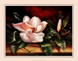 Magnolias on Red II Posters by Peggy Thatch Sibley