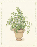 Green Plant in a Clay Pot Prints by Cappello 