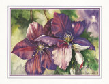 Clematis Blooms Posters by Peggy Thatch Sibley