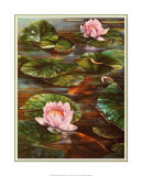 Koi with Lily Pond Print by  Durgin