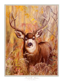 Buck in Forest Prints by Michelle Mara