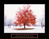 Endurance: Fall Tree Poster by Craig Tuttle