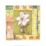 Magnolia Bloom Prints by Krista Sheldon