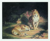 Pair of Leopards Plakaty autor William John Huggins
