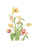 Tulip Spray II Premium Giclee Print by Pamela Shirley