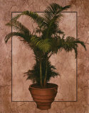 Potted Palm II Prints by T. C. Chiu