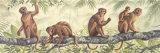 Monkey Time I Plakater