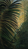 Light through the Palm Fronds Posters by Mary Spears