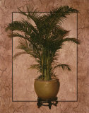 Potted Palm I Prints by T. C. Chiu