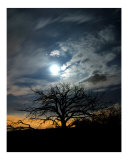 Haunted Moon Photographic Print by Harley Lever