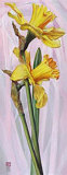 Two Yellow Daffodils Prints by Maya Nishiyama