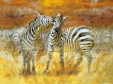 Zebras Prints by Joaquin Moragues