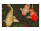 Green Rock Japanese Koi I Giclee Print by  erichan