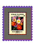 Strawflower Seed Pack Giclee Print